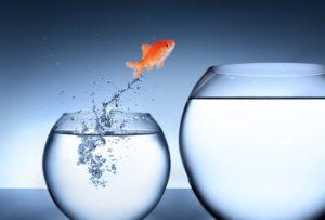 Andreas Mittlböck Motivation und Business, Golffisch springt ins größere Glas